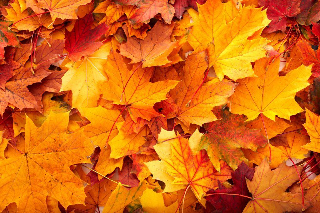 Unieke felgekleurde oranje-, geel- en roodgekleurde herfstbladeren opgestapeld. Een mooi beeld van de gekleurde bladeren die kenmerkend zijn voor de herfst. Je krijgt meteen zin in warme chocolademelk met slagroom.