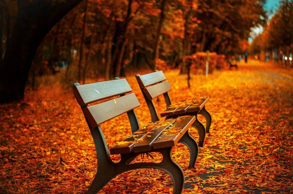 Erg felle rode kleuren rondom het bankje in een park, waar de herfst al flink heeft toegeslagen. Prachtige oranje een gele kleuren, terwijl verschillende mensen op de achtergrond genieten van een rustgevende wandeling. Een bijzondere foto.