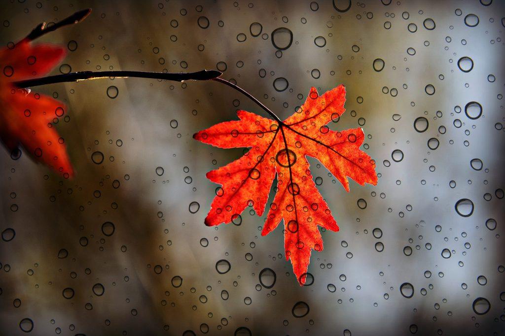Een bijzonder rood blad met daarvoor 2D-getekende waterdruppels. Het zorgt voor een mooi beeld. Een ideale achtergrond voor mensen die van tekenen, gemixt met echte beelden houden.