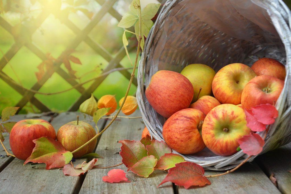 Een mooie omgevallen mand, gevuld met appels. De herfsttakjes met daaraan bladeren hangen om de mand heen.