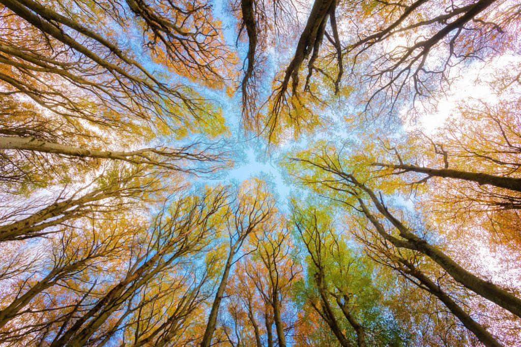 Een bijzonder beeld, recht omhoog genomen. Het zorgt voor een bijzonder licht, omdat het groen en oranje mooi wordt afgewisseld met het blauw van de lucht.