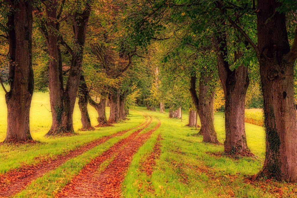 De bandensporen zijn helemaal gevuld met herfstbladeren, die van de bomen die om het pad heen staan gevallen zijn. Het gras is mooi groen, wat zorgt voor een mooie wandelervaring.