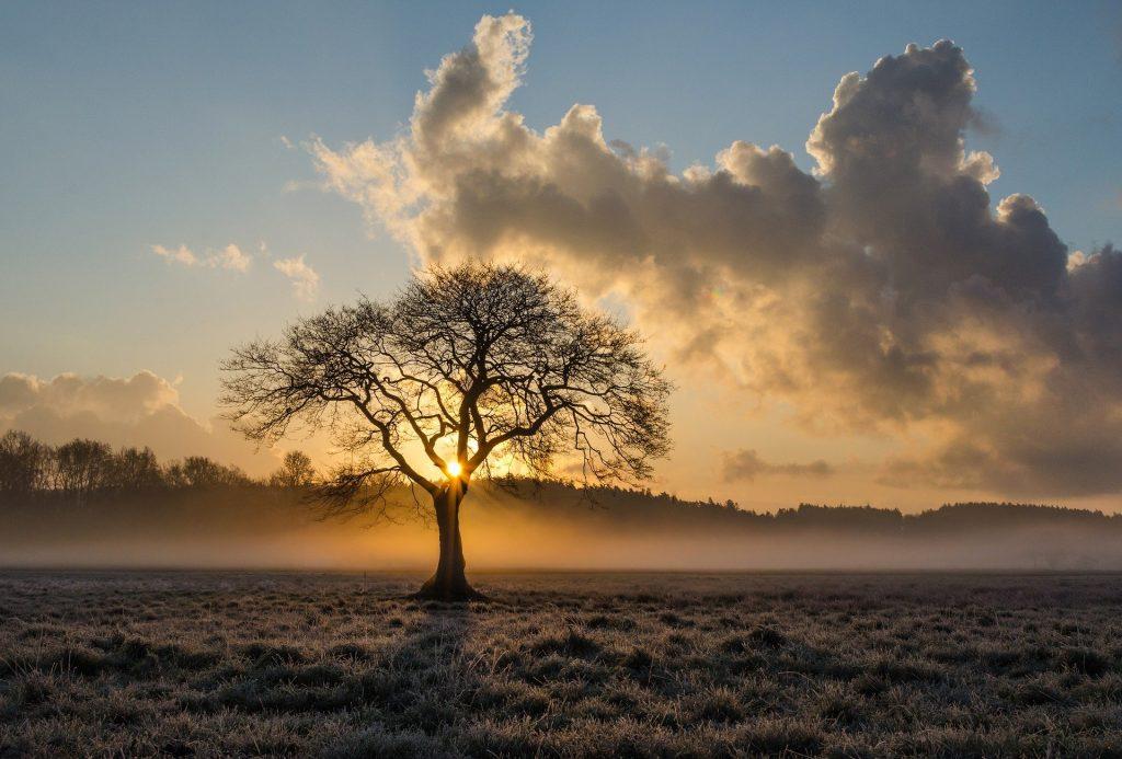 Een bijzonder grote eikenboom midden op een mistig weiland terwijl de zon net opkomt. De dauw ligt nog op het gras, waardoor de weide een wat wittere uitstraling krijgt. Een erg bijzonder beeld, de fotograaf begon zijn dag goed met deze ochtendwandeling.