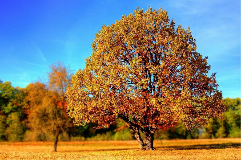 Het lijkt net op een miniatuurbeeld, maar het is daadwerkelijk een levensgrote boom. De herfst is al goed toegeslagen, want je ziet de bomen al goed veranderen, maar de bladeren zijn nog niet gevallen. Het is erg mooi weer, wat zorgt voor een mooie middag.