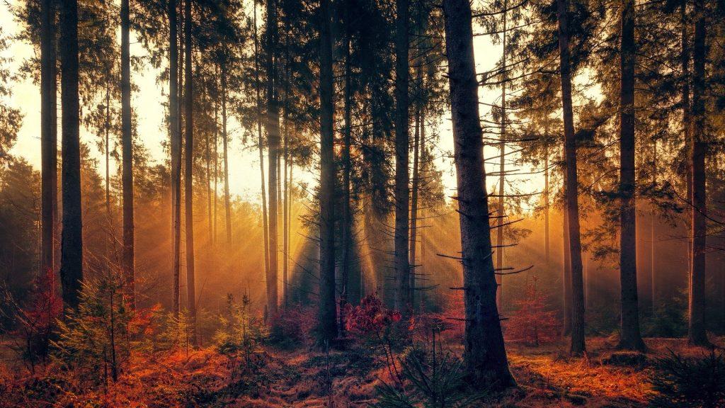 Lange, bladerloze bomen waar het gele zonlicht mooi doorheen schijnt. Mooie jonge boompjes groeien tussen de grote bomen door.