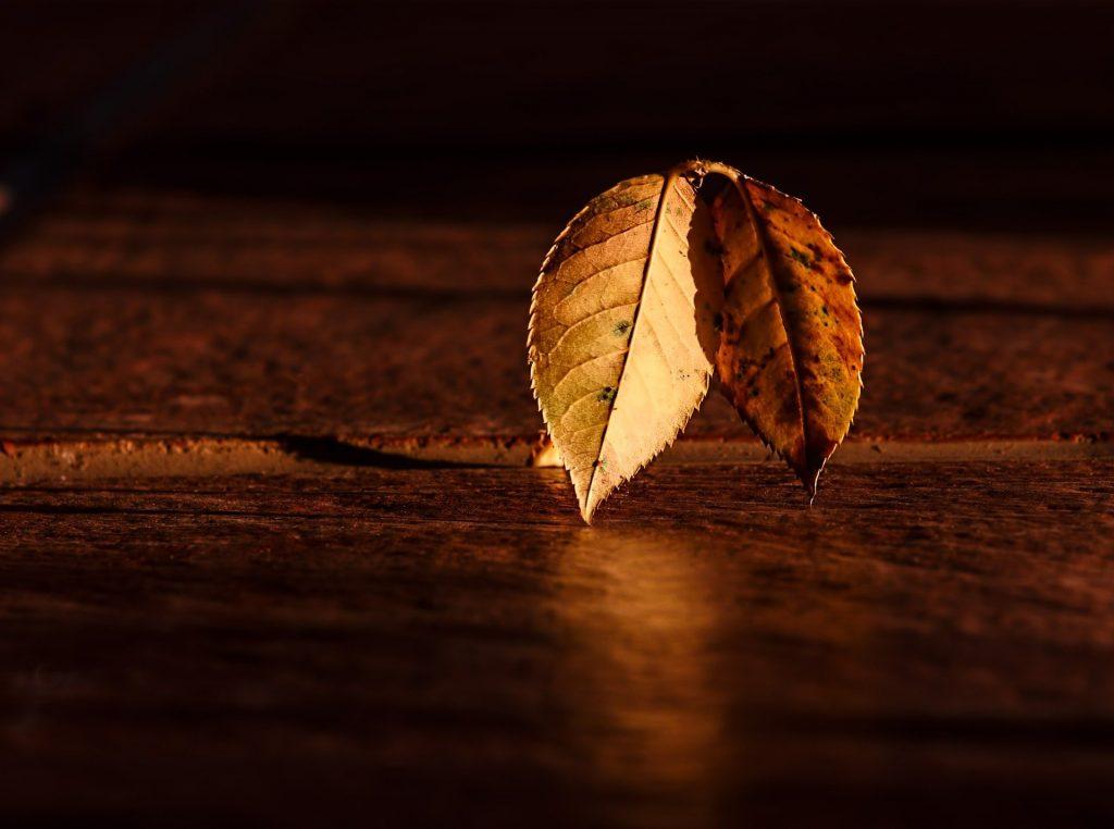 Rechtopstaande gele bladeren op een eikenhouten tafel. Het zonlicht schijnt er mooi op, wat zorgt voor een bijzonder licht.