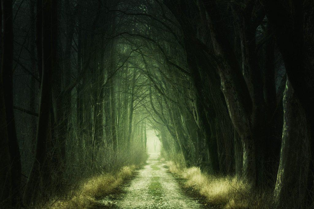 Een prachtig, bijna schilderij-achtig beeld van een bospad, wat populair is onder de wandelaars. De foto moet bijna wel bewerkt zijn, want het is een surrealistisch beeld. Dit met name door hoeveel groen er te zien is.