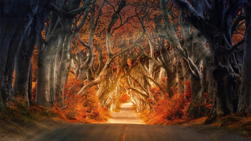 De heuvelachtige weg die iedereen wel kent van de foto's. De unieke kronkelachtige bomen die boven de heuvelachtige uitsteken. De zon schijnt prachtig tussen de bomen door. Een erg bijzondere weg om te berijden in een cabrio op een zonnige namiddag.