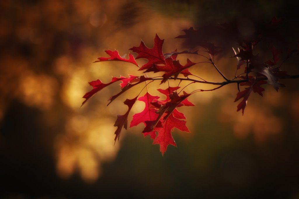 Bijzondere, kleine rode blaadjes hangen voor een bos, waar veel zonlicht op schijnt. De foto is mooi scherp gesteld.