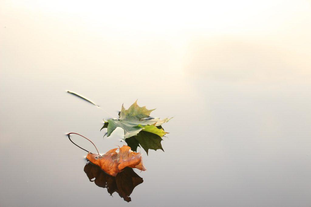 Je zou het bijna niet zeggen, maar de bladeren liggen daadwerkelijk op water. De bladeren lijken wel te zweven, maar ze liggen op een meertje, of een plas. Door het witte licht valt het bijna niet op dat het water is.