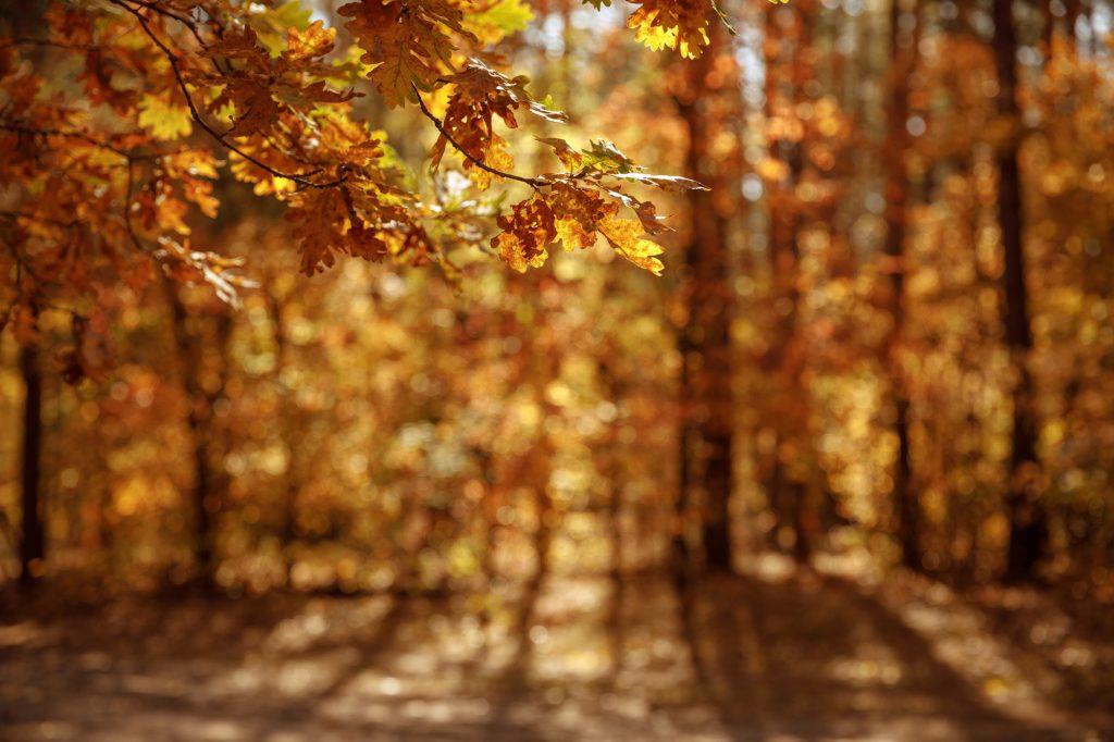 Een bruin ogend bos op een mooie zonnige dag. De herfst is al een tijdje bezig en de bladeren zijn inmiddels goed bruin.