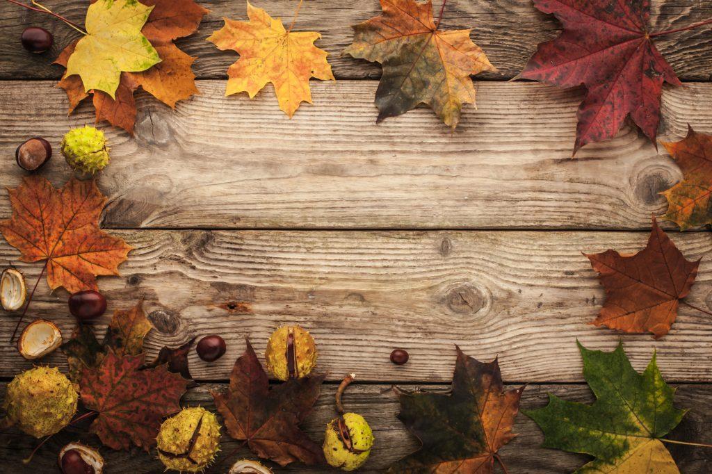 Kleurrijke herfstige esdoornbladeren en kastanjes liggend op een eikenhouten picknicktafel. De bladeren variëren van fel en mooi geel, naar een donkerder rode kleur, tot echte bruine herfstbladeren.