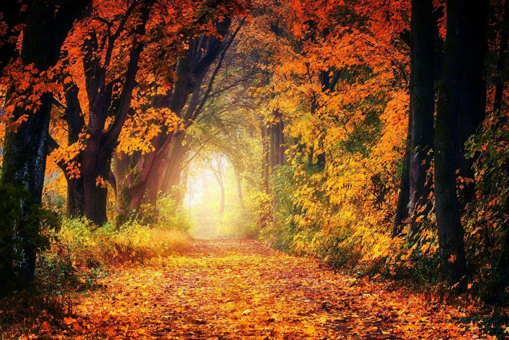 Een bijzonder wandelpad door de bossen, waarboven de lucht bijna niet meer is te zien door de bomen die erover heen hangen. Mooie oranjegekleurde bladeren die de herfst goed weergeven.
