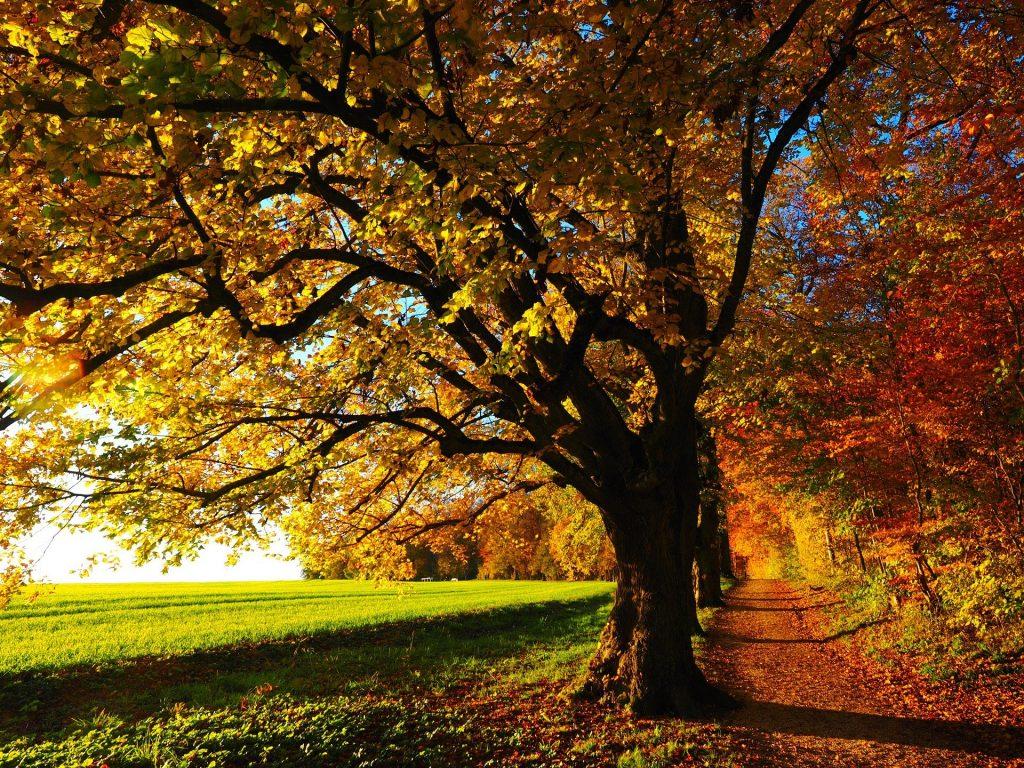 Een mooi pad, gelegen aan de rand van het bos. Het bos komt hier samen met een reusachtig weiland. De herfst is al even bezig, want de bladeren aan de bomen kleuren al mooi in de herfstkleuren.