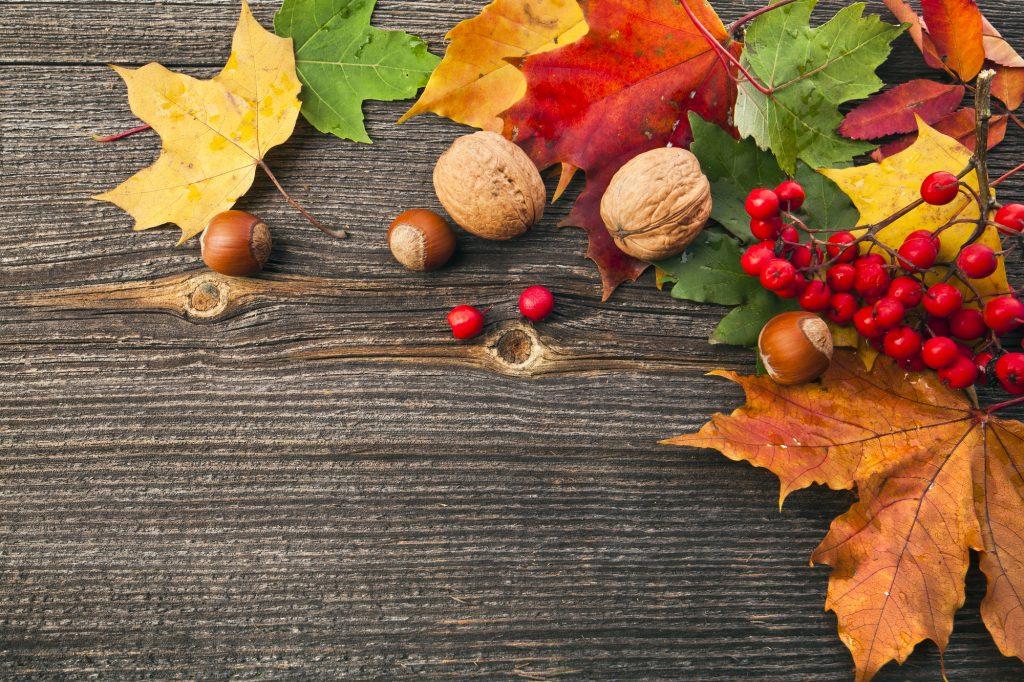 Een mix van walnoten, hazelnoten, rode bessen en mooie herfstbladeren op een houten picknicktafel. Een uniek herfst stilleven. Erg bijzondere mix van felle kleuren in de bladeren en rustgevende kleuren in de noten.