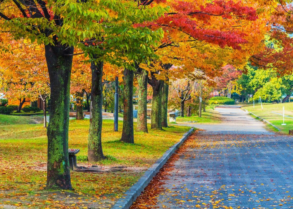 Bijzonder herfstbeeld in een stads park. Een mooi lang pad net buiten de stad, gelegen tussen herfstige bomen. Het is aan het begin van de herfst, dat zie je aan de mooie mix van groene bladeren en rood-oranje bladeren.
