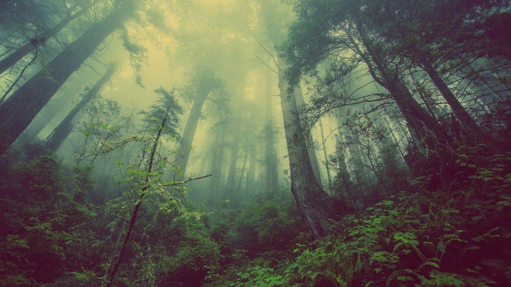 Een horrorfilmachtig beeld van een donker, mistig bos op het einde van de middag. Prachtige kleuren, groen en blauw. Het lijkt net of er elk moment een monster achter de bomen vandaan kan komen.