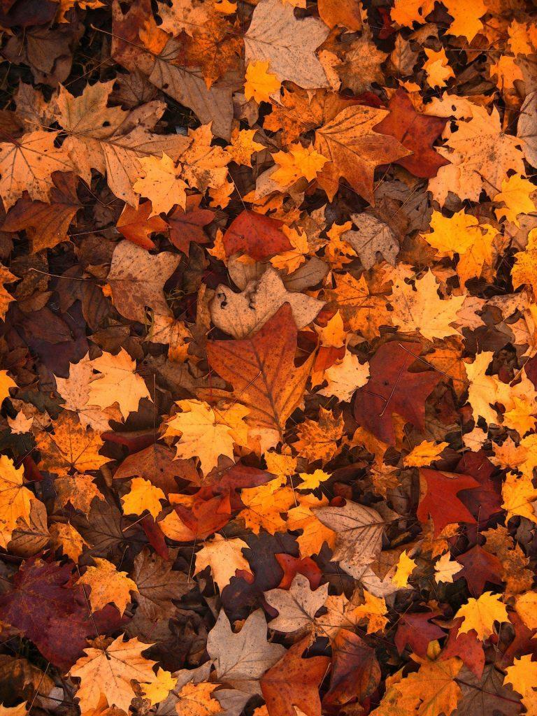 Veel verschillende soorten bladeren op de grond gelegen in het bos. De bladeren liggen vele lagen diep en variëren van hoekige, tot ronde bladeren en van gele, tot rode, tot bruine bladeren.