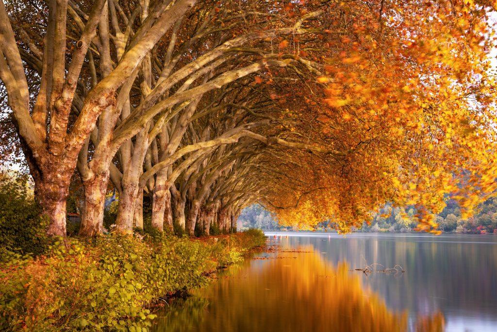 De grote geelkleurende bomen schijnen op bijzondere wijze op het grote meer. Links van de bomen loopt een prachtig wandelblad, vanwaar een fenomenaal uitzicht over het meer te zien is.