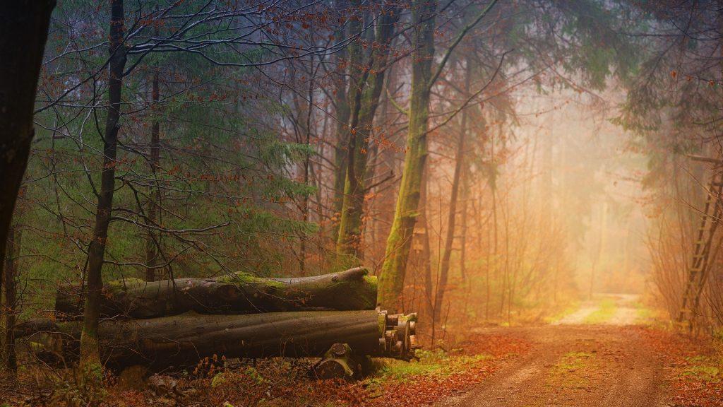 Een erg bijzonder beeld van een wandelpad, met prachtige doorschijnend licht. Naast het pad ligt een stapel boomstronken.