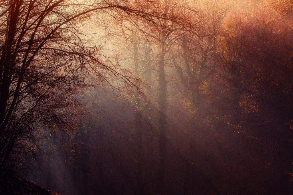 De pérfecte rustgevende achtergrond. De achtergrond is niet druk, maar wel heel mooi. Het zonlicht wat tussen de bomen doorkomt zorgt voor een prachtig beeld.