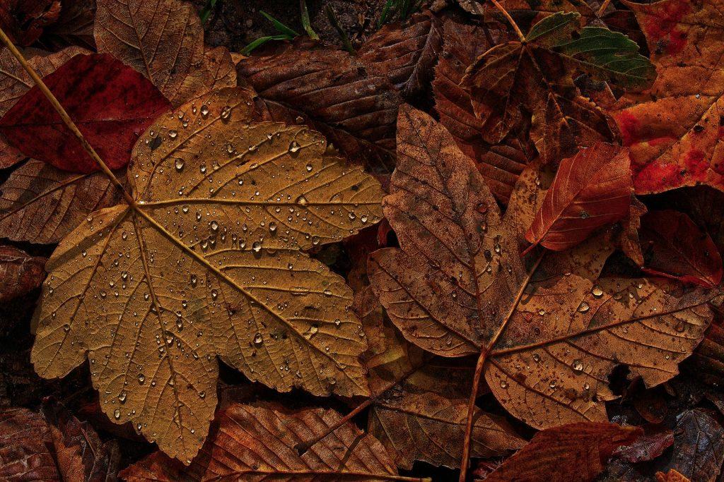 De bekende herfstbladeren liggen op de grond met de dauw er nog op. Het is dus vroeg op de ochtend.