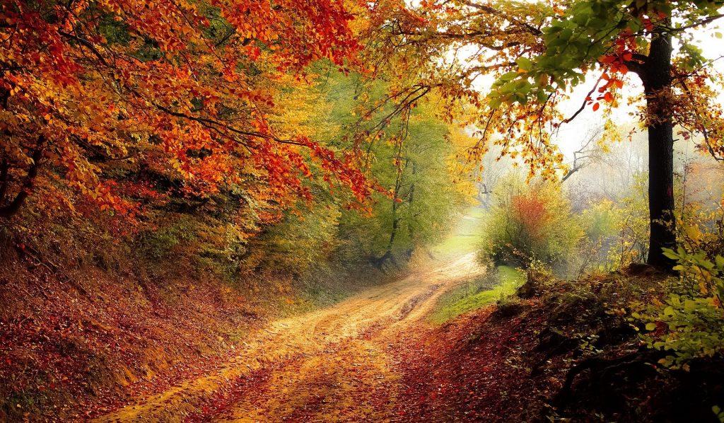 Een bijna droomachtig wandelpad door de heuvelachtige bossen. De mooie herfstbomen met de gekleurde bladeren in de welbekende herfstkleuren.