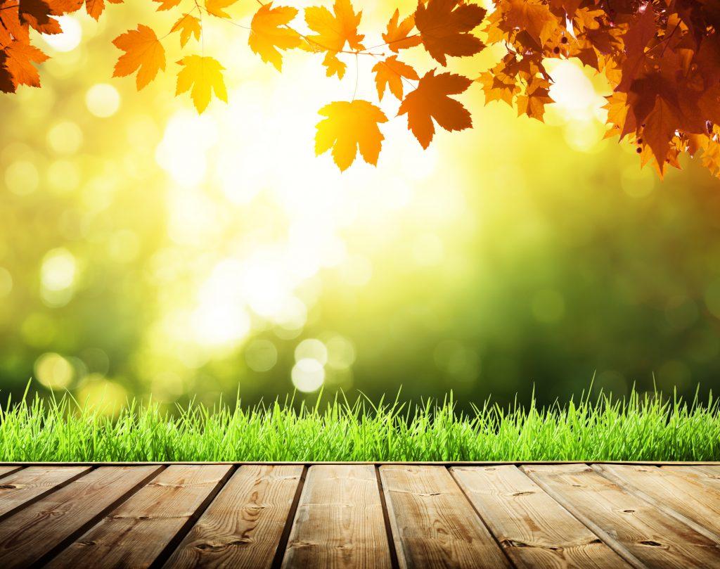 Een prachtige foto met een wazige 'bokeh'-achtergrond. Het zonlicht komt mooi tussen de herfstige bomen door. Het groene gras, samen met de herfstrode bladeren zorgen voor een voortreffelijk beeld.