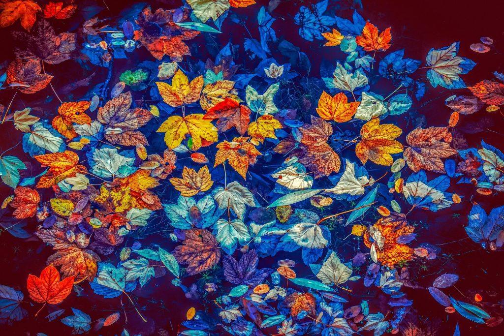 De foto is duidelijk bewerkt, want het water is onrealistisch blauw. Dat maakt hem niet minder bijzonder, want het geeft een magistraal herfstbeeld. De mooie rode en gele bladeren in het bijna donker-azuurblauwe water.