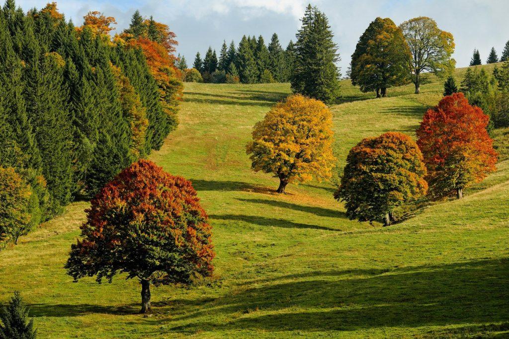 Een mooi beeld van een heuvelachtig herfstlandschap. De bomen hebben verschillende kleuren, bijvoorbeeld rood, geel of groen. De bladeren hangen nog aan de bomen, wat laat zien dat we aan het begin van de herfst zijn.