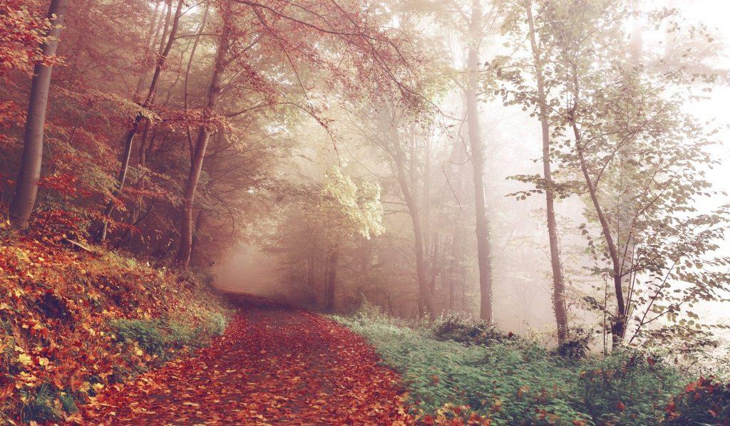 Een lang wandelpad, gelegen aan een lichte afgrond. De kleuren zijn bijzonder bewerkt wat voor de unieke kleuren groen en oranje zorgt. Daartussen schijnt het zonlicht mooi op de mist.