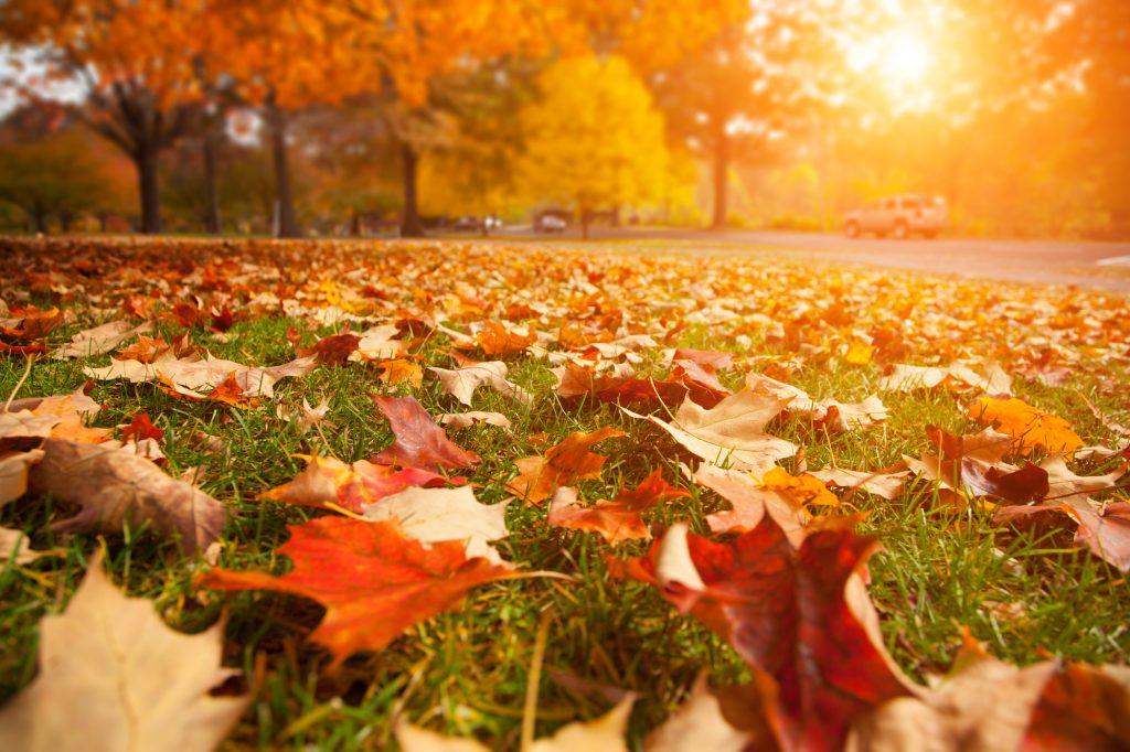 Prachtige rode en bruine herfstbladeren op het mooi groene gras. Pakkende omgeving in een park aan de rand van een stad. De zon begint langzaam onder te gaan.