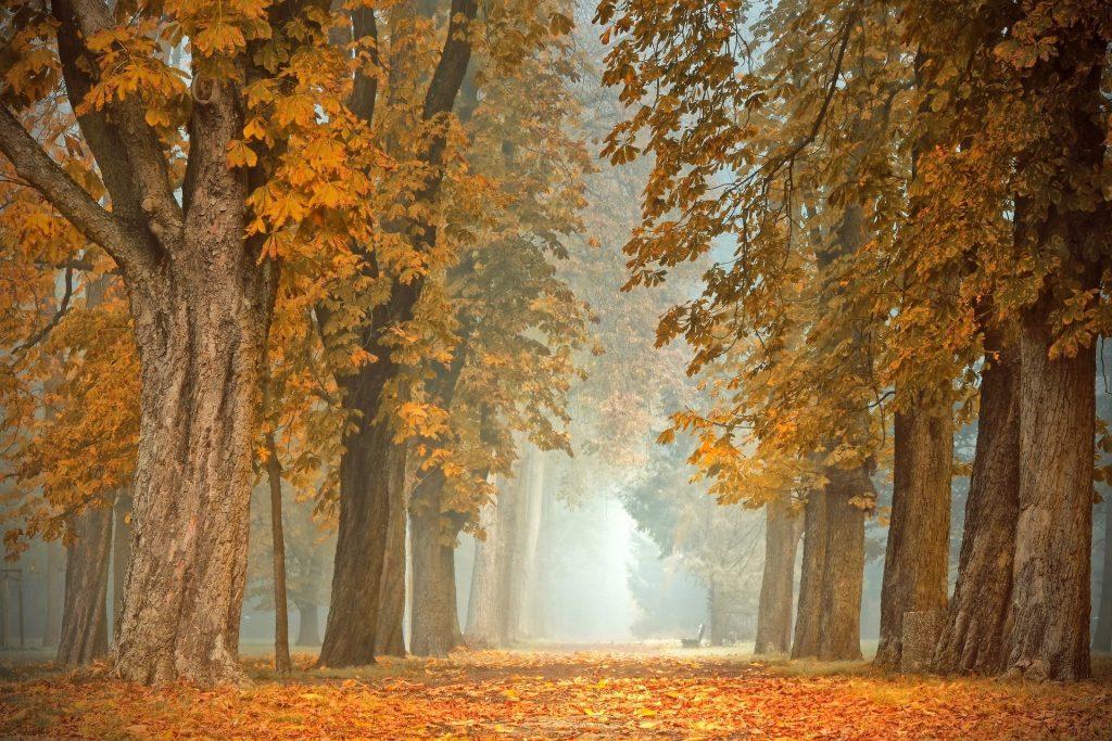 Een lang uitstrekkend wandelpad waarover een mooie ochtendmist hangt. Langs het pad staat een mooi bankje, waar je even helemaal tot rust kunt komen.
