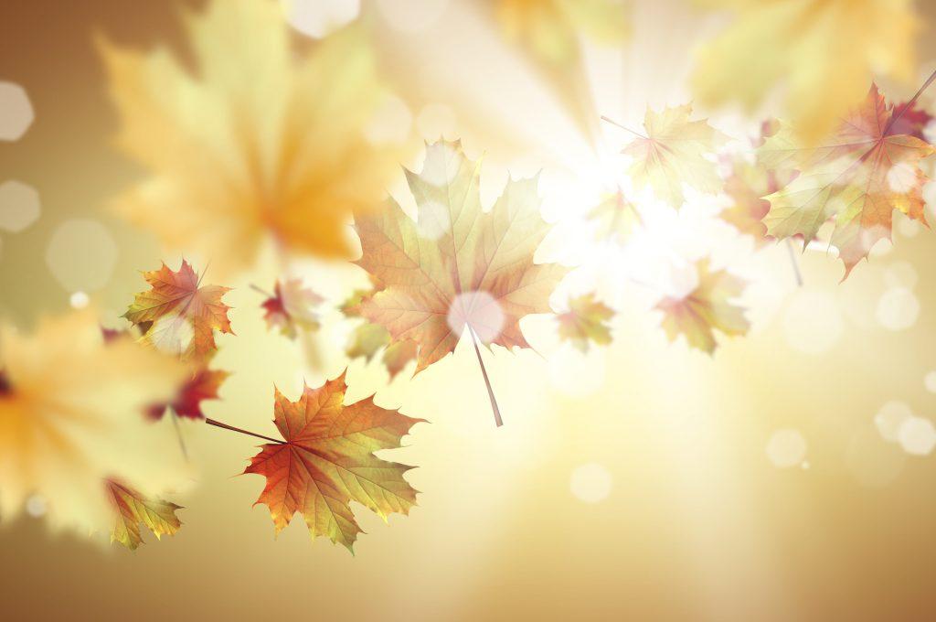 Een bijzonder fotografisch beeld met zwevende bladeren. Achter de gele bladeren zie je de zon prachtig doorkomen. Het beeld is bijna te mooi om waar te zien en het is daarom aannemelijk dat het beeld geschoten is in een fotostudio.