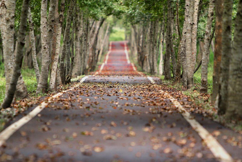 Een beeld wat iets minder kenmerkend is voor de herfst, maar nog steeds prachtig. De dunnere boompjes die langs dit pad lopen hebben nog groenere bladeren, maar er liggen al veel bruine herfstbladeren op de grond.