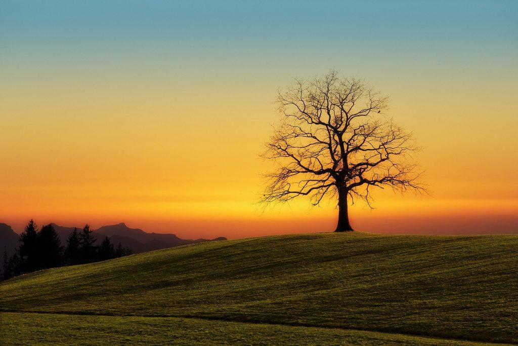 Een prachtige zonsondergang, oranje-geel en blauw. Het silhouetten beeld van de zwarte boom geeft een bijzonder uitzicht. Een erg mooie achtergrond voor iemand die van zonsondergang, heuvels en bomen houdt.